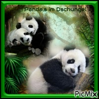 Pandas im Dschungel