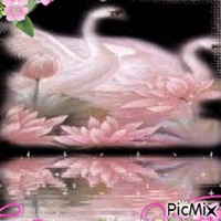 Cygnes et fleurs roses
