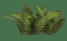 Plants.Plante.Victoriabea