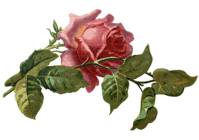 roses vintage GS