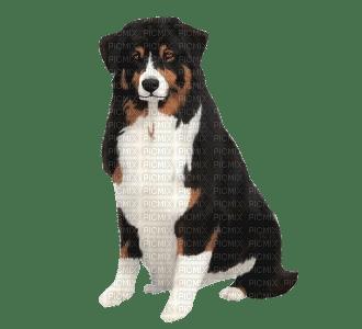 Berger Australien de Dogzer