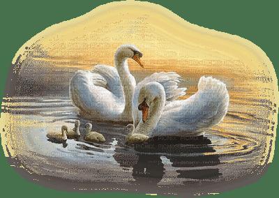 patymirabelle oiseau cygne