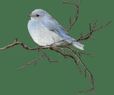 chantalmi oiseau bird hiver winter neige snow