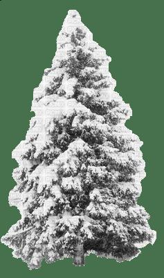 pinetree-snow-winter