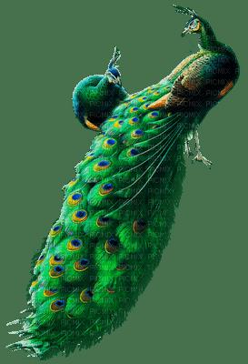 Kaz_Creations Birds Bird Peacock