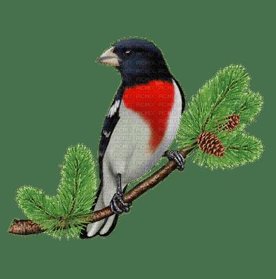 bird -  Nitsa