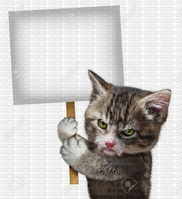 gato zangado