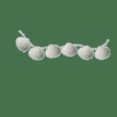 seashell deco shellfish