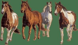 dulcineia8 cavalos