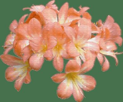 orange peach flower, sunshine3