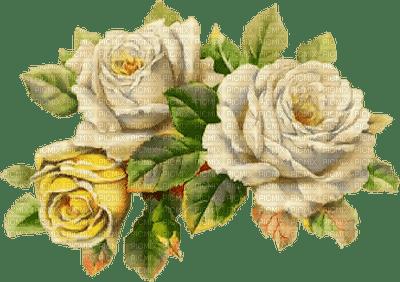 fleur Pelageya  rose