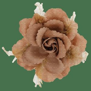 beige flower, sunshine3