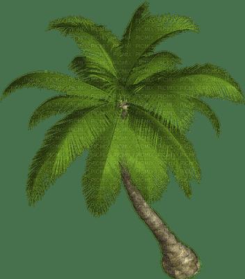 TREE natural tonydanis