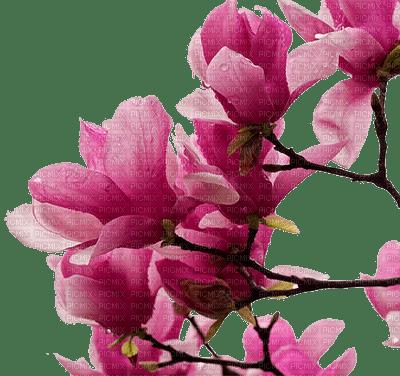 Fleur Rose Magnolia Flower Tube Image Fond Gif Cadre Aime Love