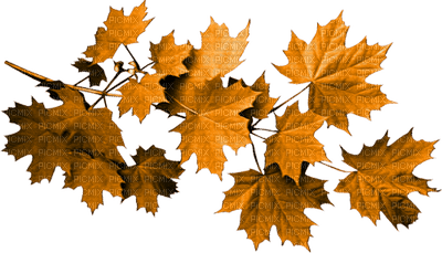 automne feuilles  autumn leaves