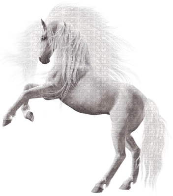 minou-horse-animal-white