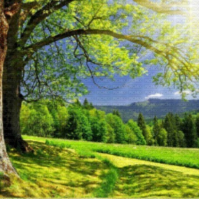 loly33 spring printemps fond  paysage
