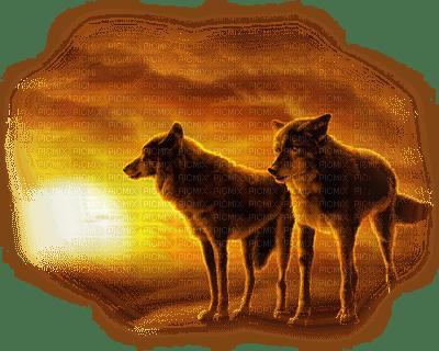 wolf sunset loup coucher de soleil