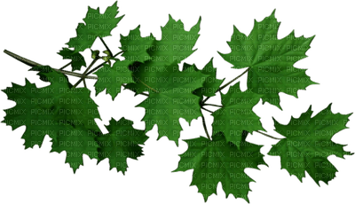 leaves green--feuilles vert