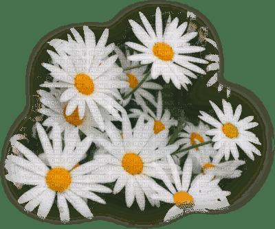 daisy flowers marguerite fleur