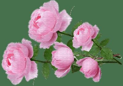 kukka flower fleur ruusu rose