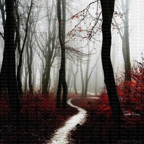paysage, nature, forêt gothique,Pelageya