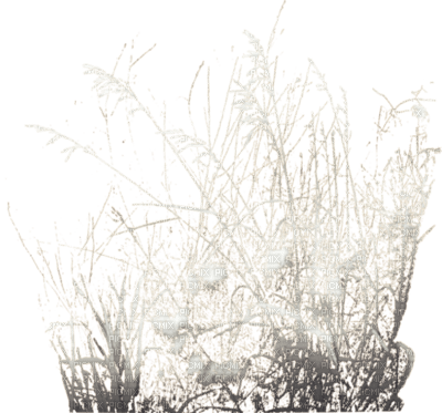 cecily-herbes hiver neige