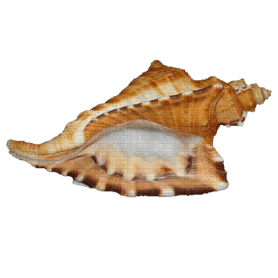 Kaz_Creations Shell Beach Seaside