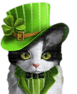st patrick cat chat