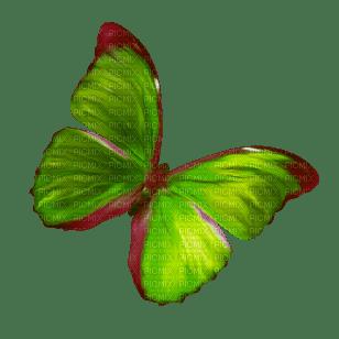 papillon (