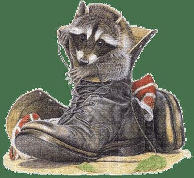 raton-Laveur