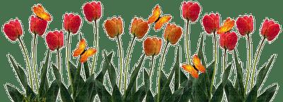 tulips border flowers spring tulipes bordure fleurs printemps