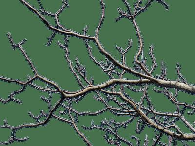 branch winter_branche hiver_Blue DREAM 70