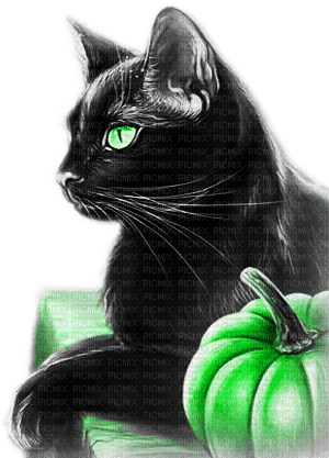 soave cat autumn pumpkin halloween deco animals