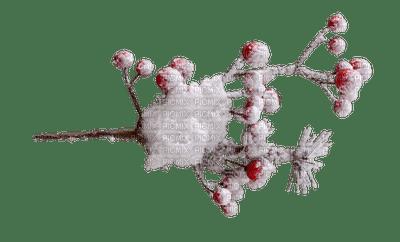 ośnieżona gałązka