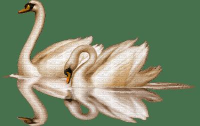 Swan*kn*
