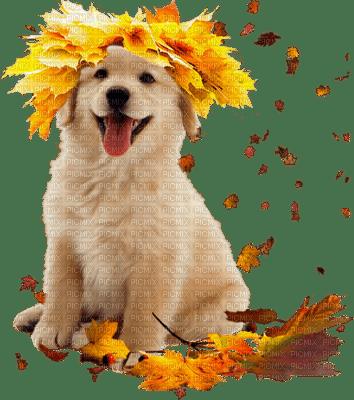 chien automne-dog autumn