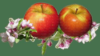 apple, fruit, omena, hedelmmä