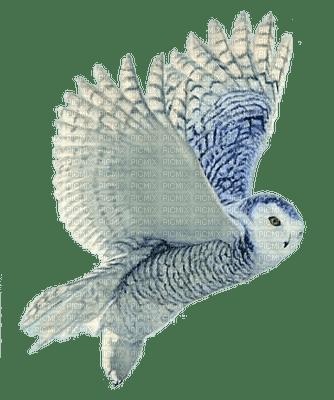 owl katrin