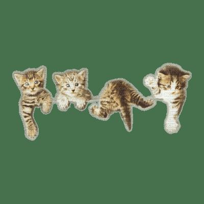 cats border chats