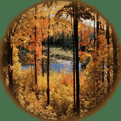 autumn forest  automne paysage