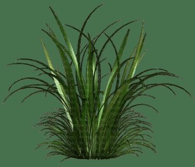 Tube plante verte picmix for Plante jungle