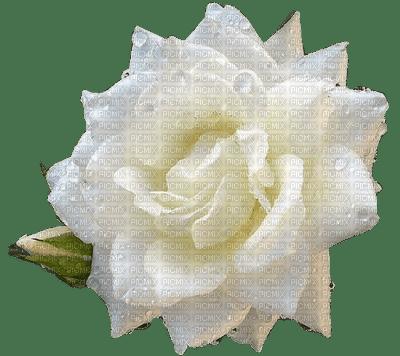 Salomelinda fleur rose ! !