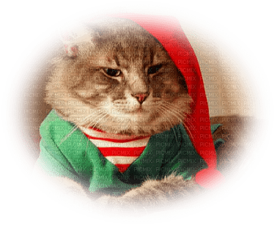 cat chrstmas chat noel
