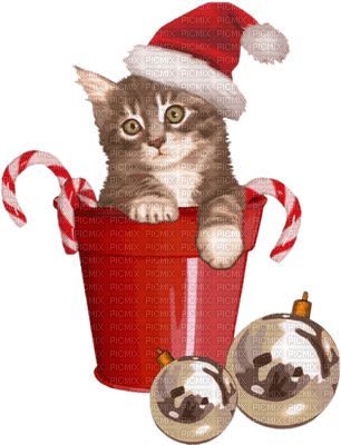 cat christmas chat noel