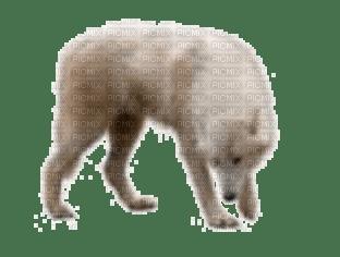 az loup wolf animaux animal