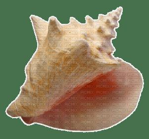 muschel shell shellfish coquille sea meer mer ocean océan ozean  fish  summer ete beach plage strand tube