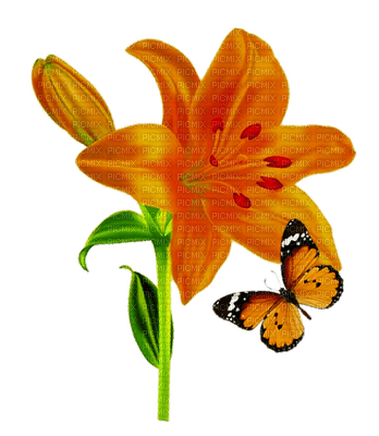 Fleur-orange-lys-papillon
