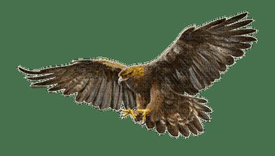 eagle adler bird western wild west  occidental Native American Américain de naissance        Amerikanischer Ureinwohner wilde westen ouest sauvage  tube  indian indianer indien