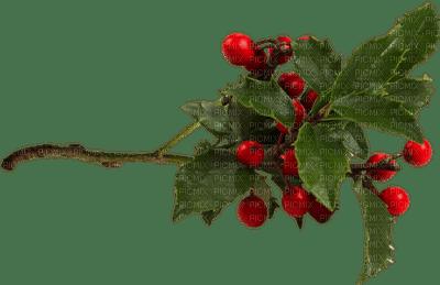 mistletoe bp